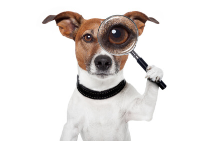 Dog Magnify Glass