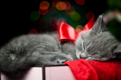 Cat nap holiday