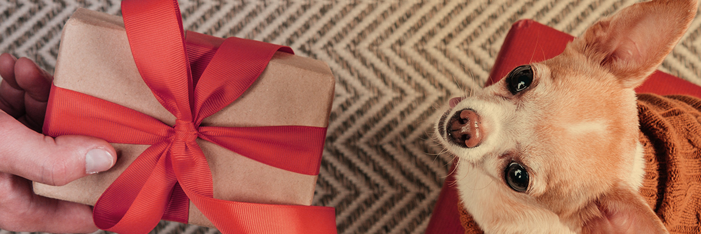 Dog being given gift box