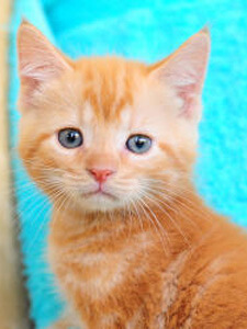 A kitten from Paws South Florida Rescue